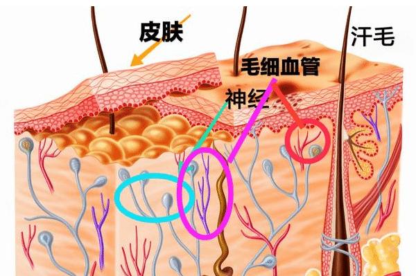 866.png 医生大白话:关于过敏性紫癜,最基本的知识你了解多少? 相关健康资讯