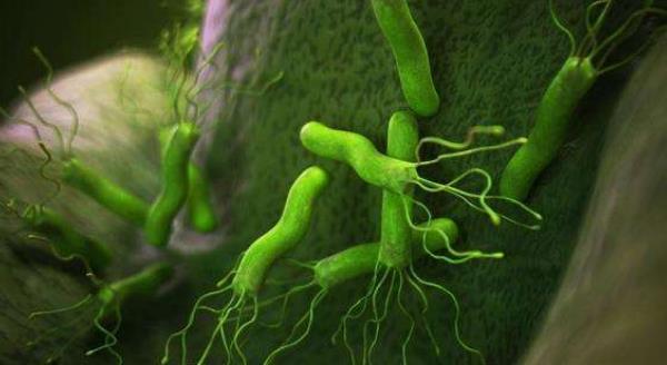 幽门螺旋杆菌多久变癌 幽门螺旋杆菌多久变癌?防止癌变的关键方式! 胃肠道相关好文