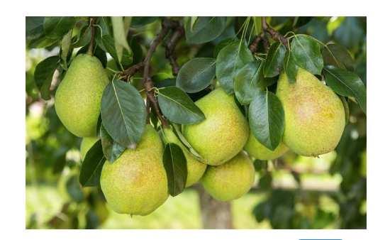 腺样体肥大手术后吃什么水果好 腺样体肥大手术后吃什么水果好,父母们快收好! 腺样体肥大专题