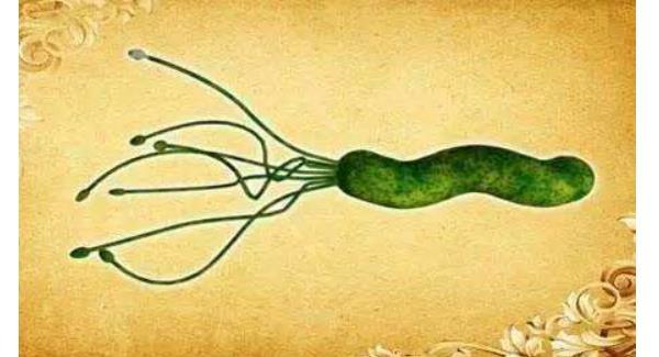 w幽门螺杆菌最佳治疗方法 幽门螺杆菌最佳治疗方法,我总结好了,都在这里 ! 胃肠道相关好文