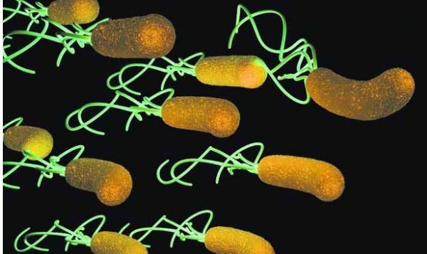 建议不要杀幽门螺杆菌 建议不要杀幽门螺杆菌?先搞懂这三个关键! 胃肠道相关好文