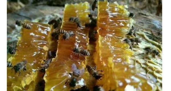 幽门螺杆菌最怕的食物和水果 幽门螺杆菌最怕的食物和水果,经常吃,保护胃黏膜! 胃肠道相关好文