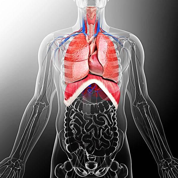 你知道扁桃体为什么会发炎吗? 你知道扁桃体为什么会发炎吗? 扁桃体相关问题