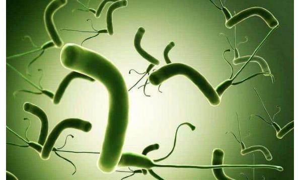 幽门螺杆菌自动转阴 幽门螺杆菌自动转阴?一句话告诉你! 胃肠道相关好文