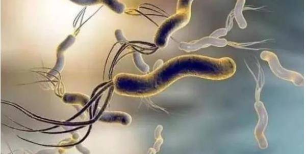 幽门螺杆菌正常指标 幽门螺杆菌正常指标,什么时候才需要用药治疗? 胃肠道相关好文