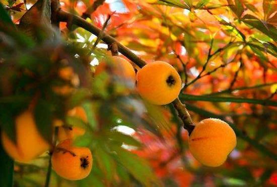 """扁桃体发炎""""克星"""",以下三种水果你知道吗? 扁桃体发炎""""克星"""",以下三种水果你知道吗? 扁桃体相关问题"""