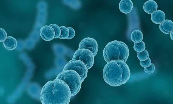 交通性鞘膜积液的症状有哪些 交通性鞘膜积液的症状有哪些,怎样鉴别? 泌尿系健康栏目