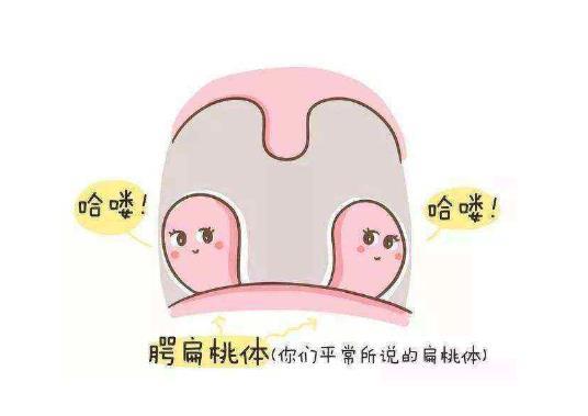 扁桃体旁边长了肉疙瘩,这个是什么东西? 扁桃体旁边长了肉疙瘩,这个是什么东西? 扁桃体相关问题