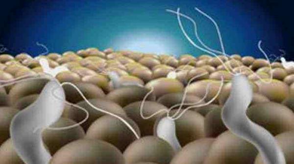 幽门螺旋杆菌四联疗法副作用 幽门螺旋杆菌四联疗法副作用,严重吗? 胃肠道相关好文