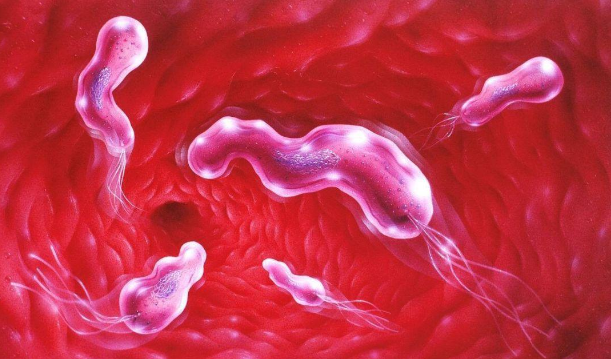 QQ截图20210529140844.png 感染幽门螺杆菌注意这4点!不用去医院 胃肠道相关好文