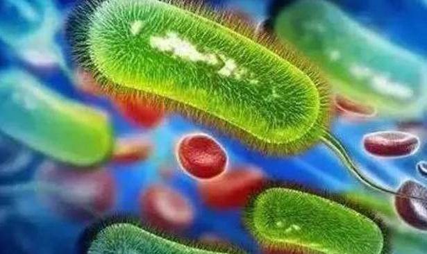 幽门螺杆菌如何根治,这三个谣言不要信了!