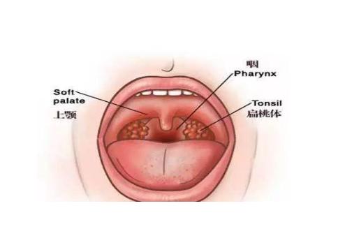小孩张嘴睡觉一定是腺样体肥大吗,腺样体对宝宝的危害有多大?